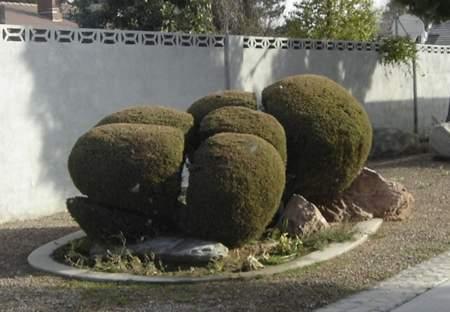 изпълнение градини
